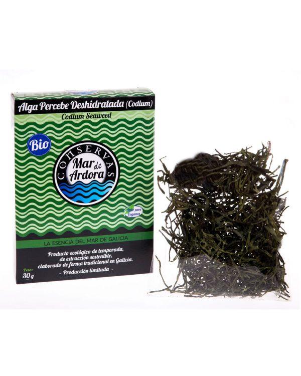 alga percebe deshidratada