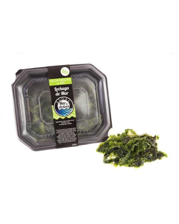 alga lechuga de mar fresca